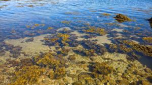 Bienfaits des algues sur la peau